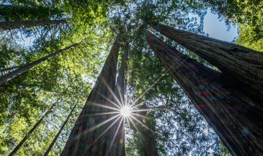 comment-mesurer-la-hauteur-dun-arbre